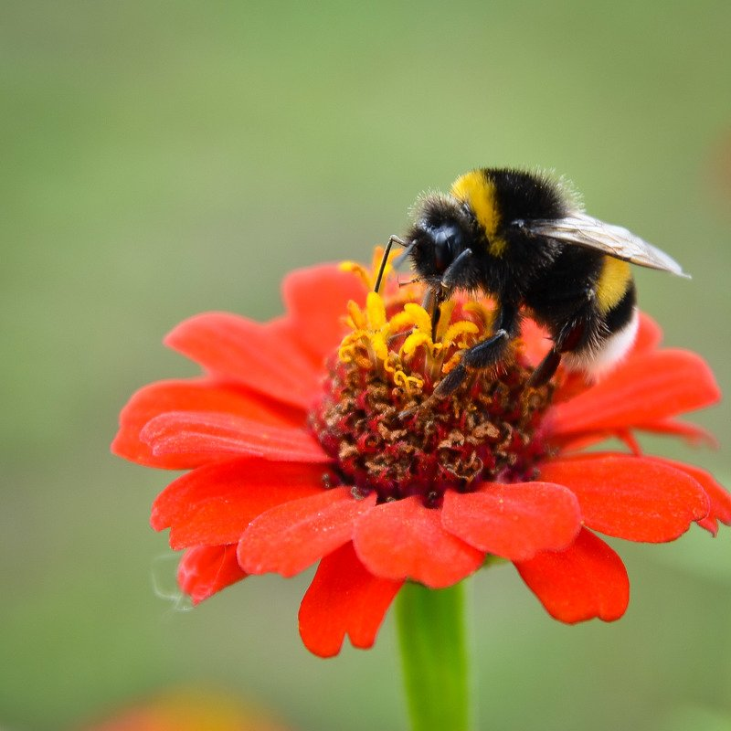 лето, цветы, макро, насекомые, красота Лето.photo preview