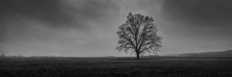 дерево, тучи, ч/б, осень, поле ***photo preview