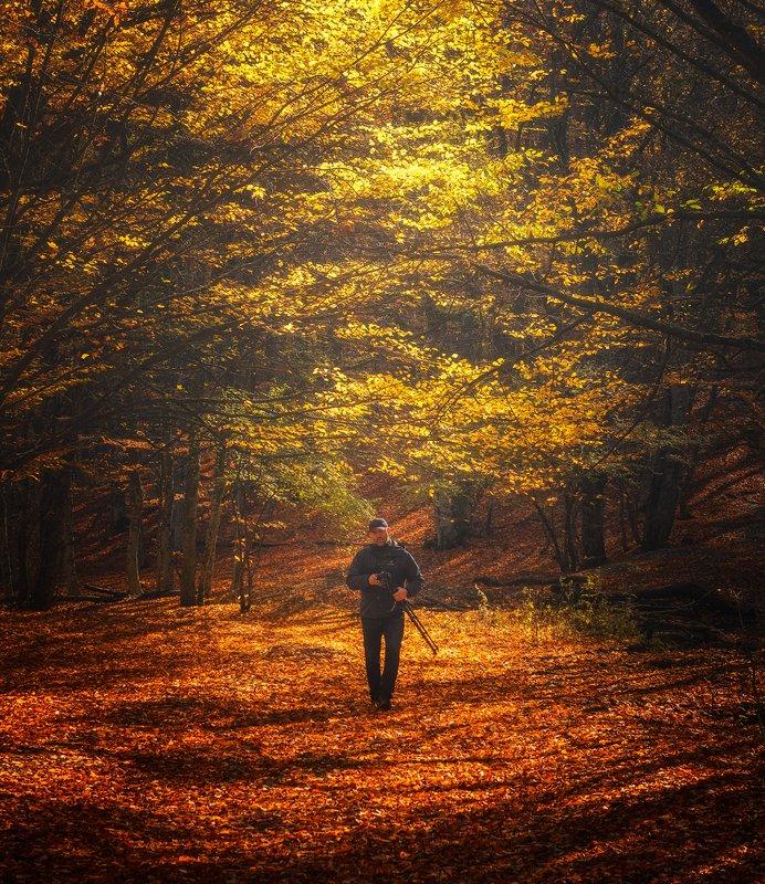 лес осень крым горы nikon никон Осеньphoto preview