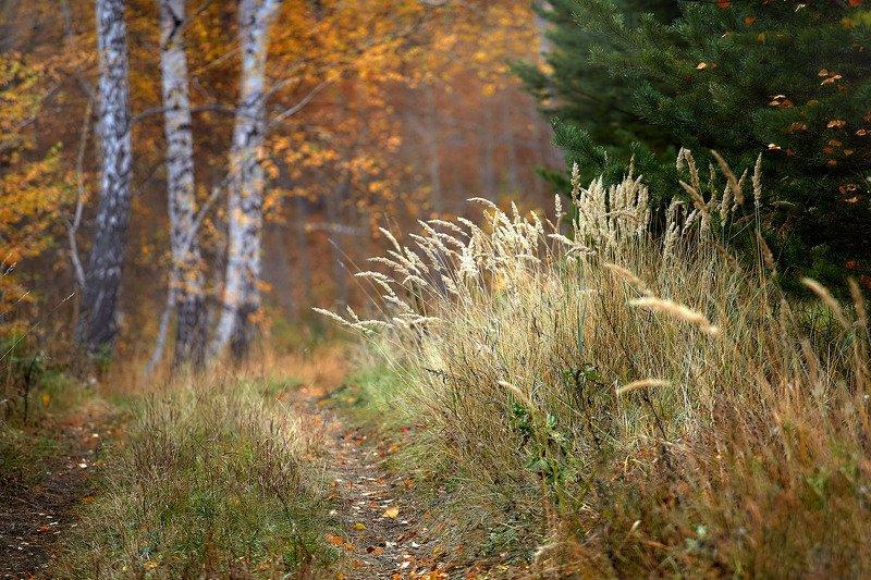 башкирия, южный урал орск новотроицк Прогулки по Лесу!photo preview
