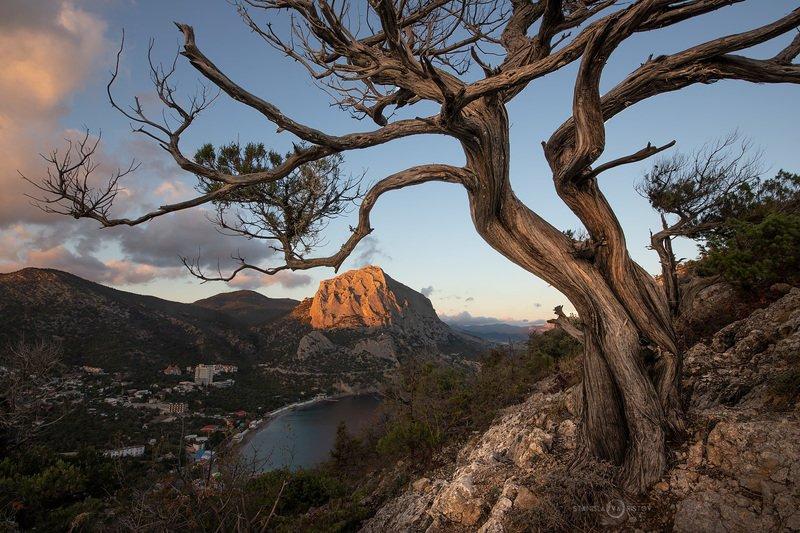 Вид на Новый Свет и скалу Соколphoto preview