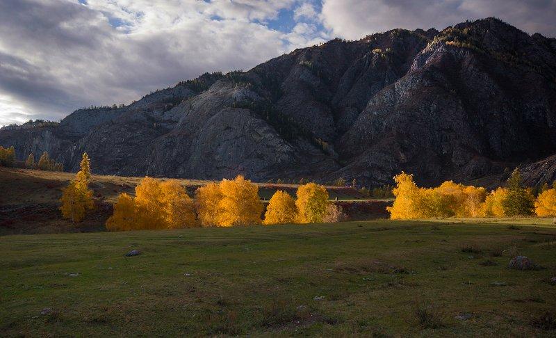 алтай, осень, горы, деревья, чуйский_тракт, закат, свет, желтые, палитра В осеннем золотеphoto preview