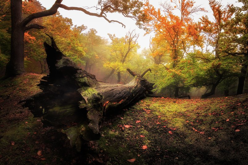Colorful forest фото превью