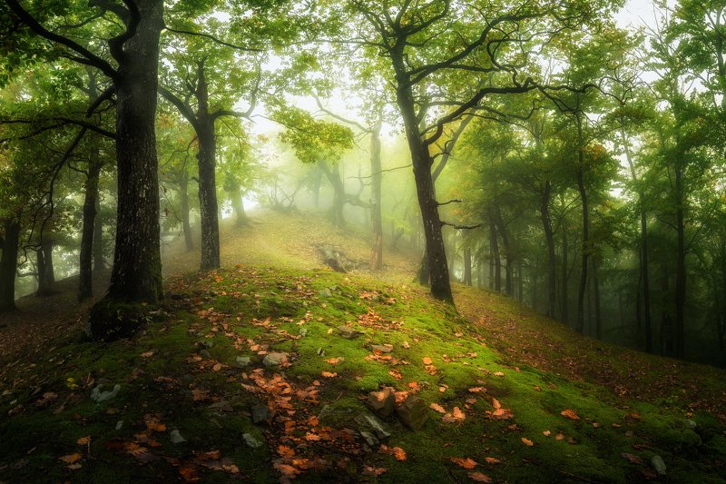 Mysterious forest in the Carpathians фото превью