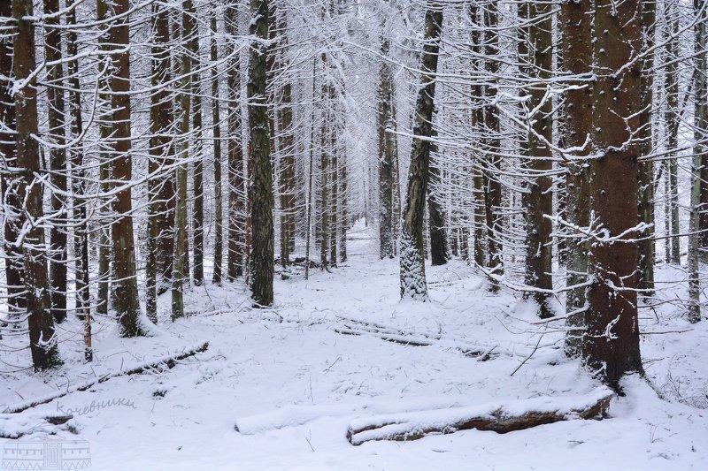 лес, зима, снег, снегопад,пейзаж, snow После снегопадаphoto preview
