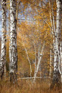 Осенний воздух...