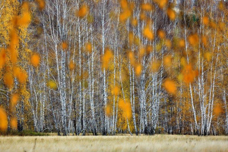 башкирия, южный урал орск новотроицк Осенняяphoto preview