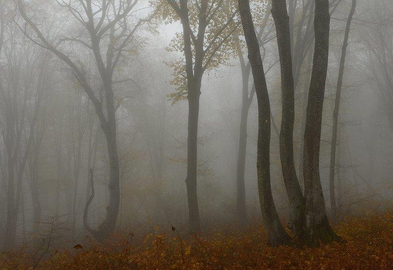 осень, кабардино-балкария Ноябрьphoto preview