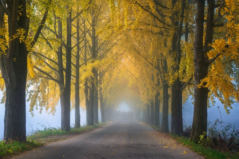 autumn, trees, light, path, road Good morning!photo preview