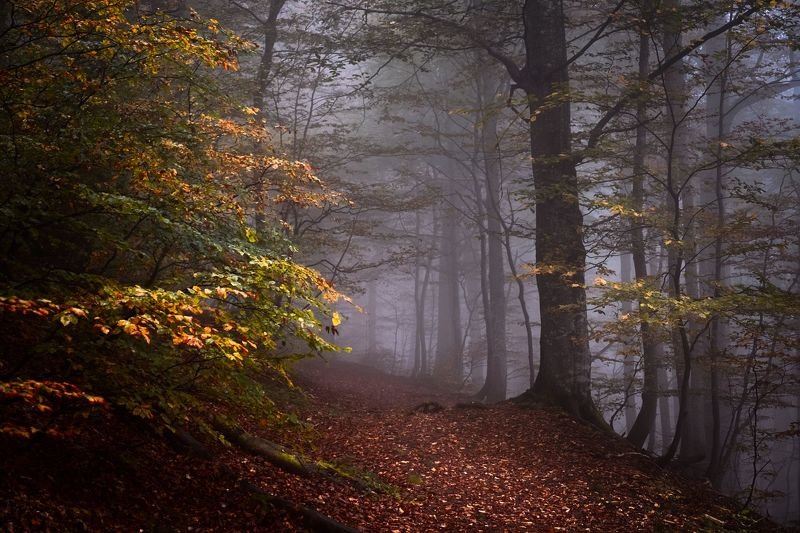 осень, лес, туман, тропинка Осень в лесуphoto preview