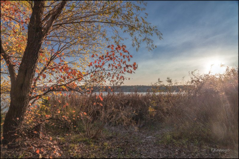 осень,дерево,контражур Тёплая осеньphoto preview