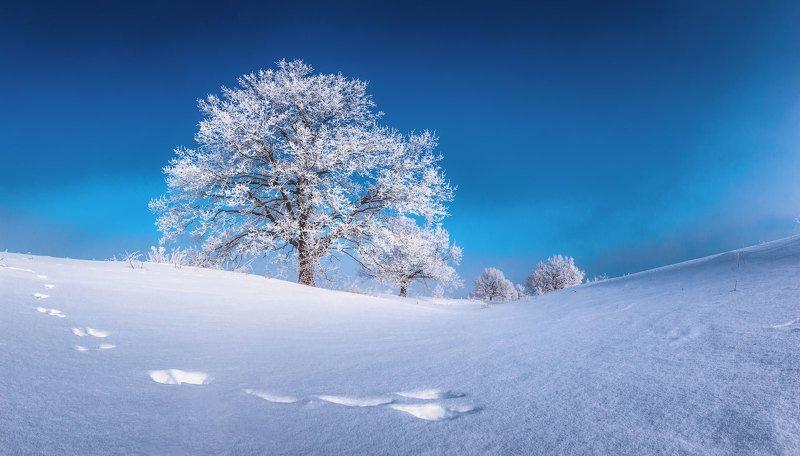 дерево, иней, зима, мороз По следам зайцаphoto preview