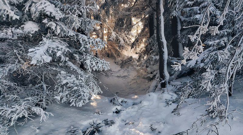 лес, зима, снег, природа, пейзаж Снежный закутокphoto preview