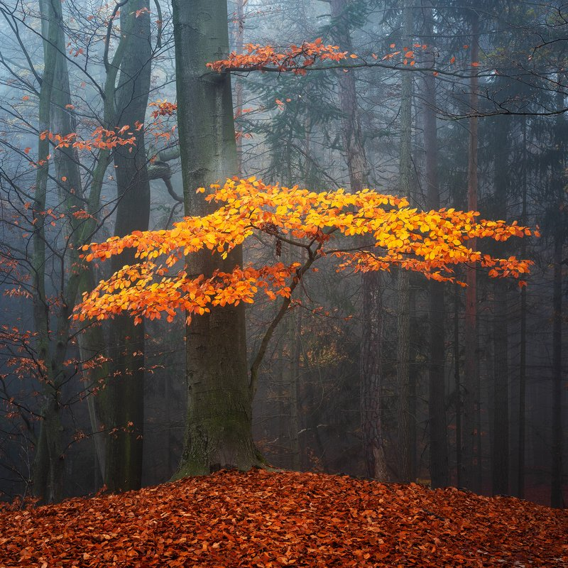 autumn, fall, fog, forest, colors, tree, czech republic, nature, landscape Golden Autumnphoto preview