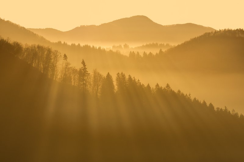 Morning rays фото превью