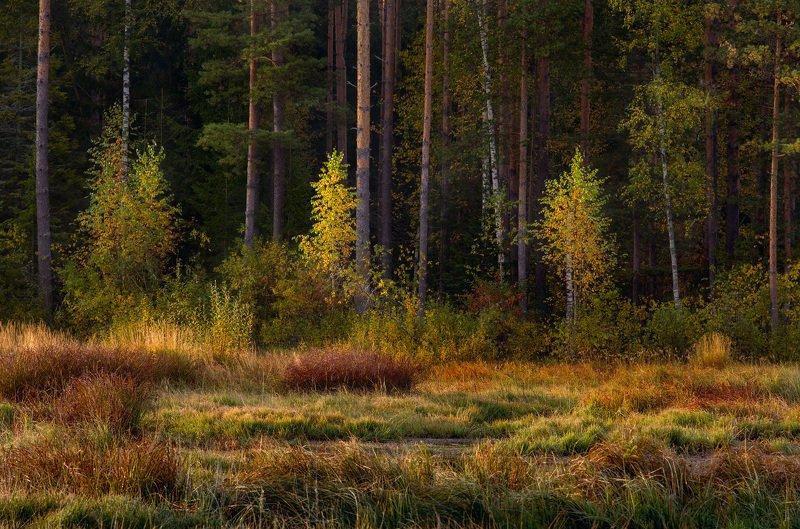 утро сентябрь лес опушка состояние суходол Робкие шаги осениphoto preview
