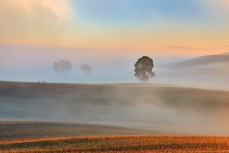 Autumn fieldsphoto preview