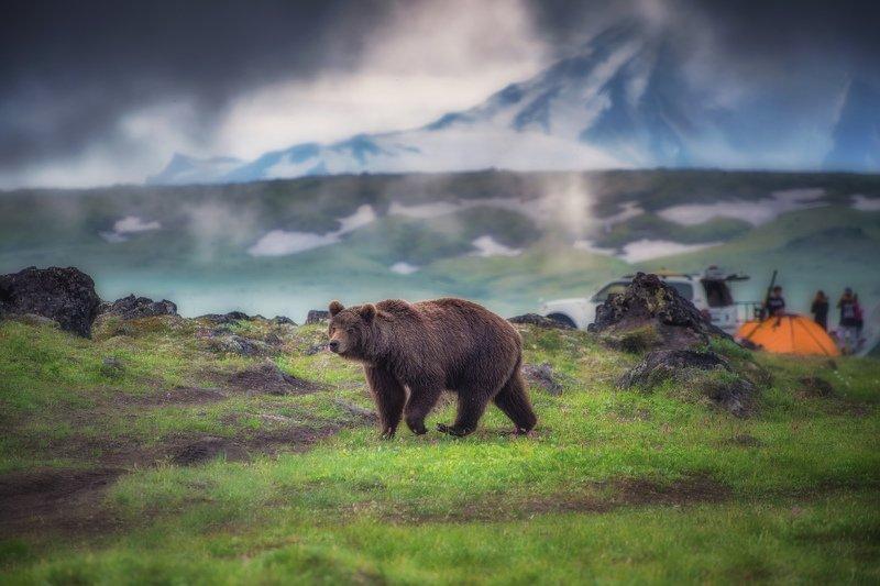 камчатка,медведь туристphoto preview