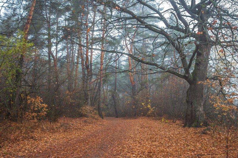 дубы, сосны, природа, осень, октябрь, лес, заповедник photo preview