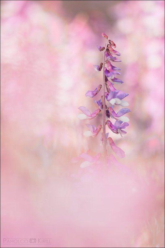 Розовый туманphoto preview