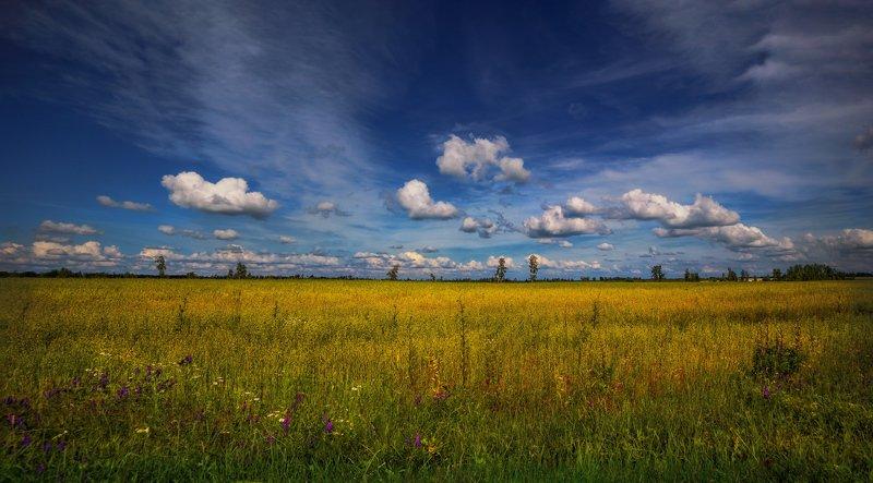 лето, поле, небо, Про облака 2photo preview