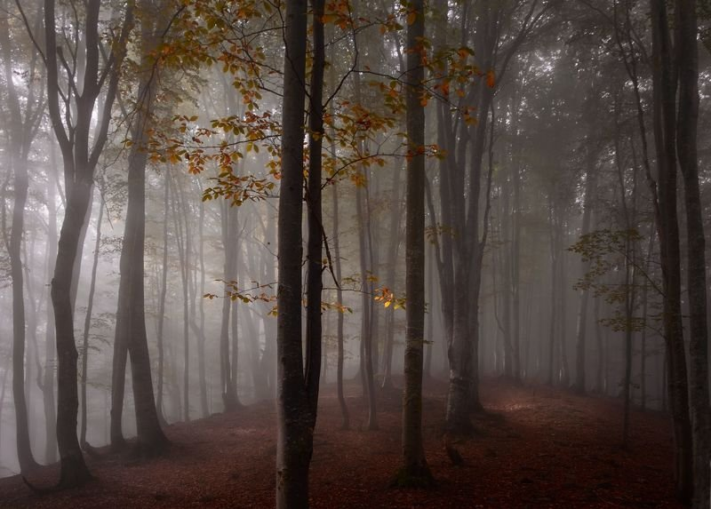 осень, лес, туман В осеннем лесуphoto preview