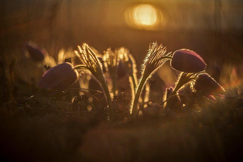 Сон трава на закате дняphoto preview