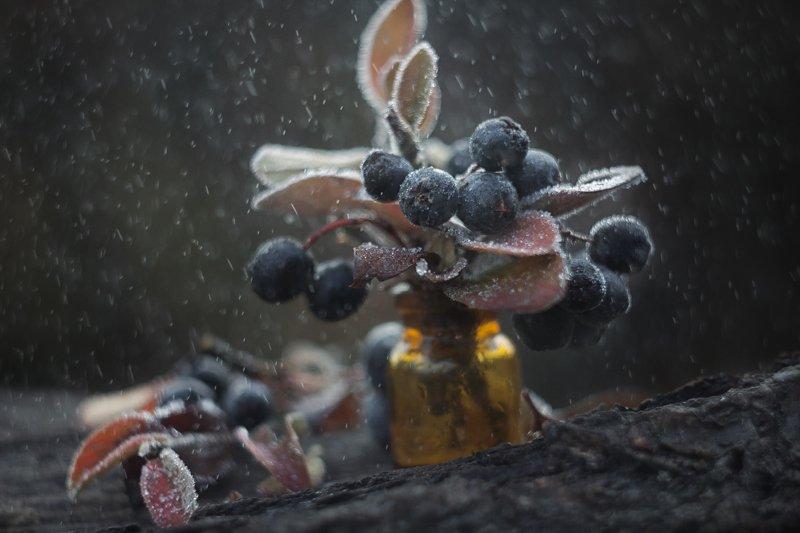 изморозь,ягоды, макро, веточки, снег, дождь, баночка В ноябреphoto preview