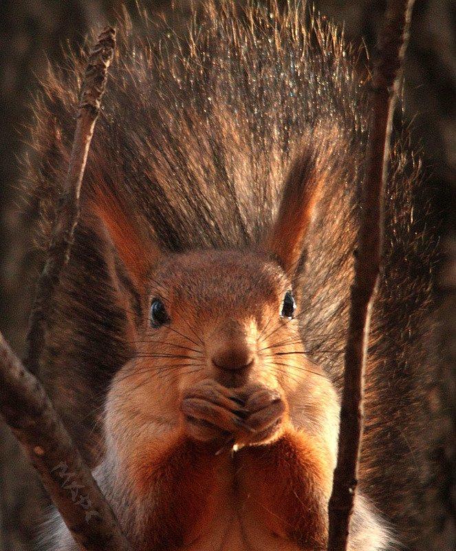 животные белка осень портретphoto preview