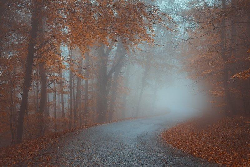 medvednica, croatia, zagreb, landscape, forest, fog, mist, autumn, tree, road  medvednicaphoto preview