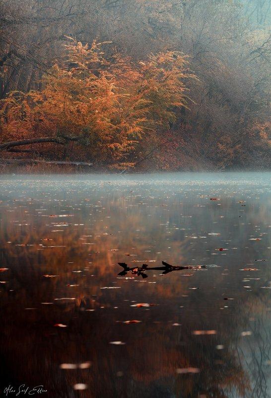 autumn, landscape, photography Autumn Moodphoto preview