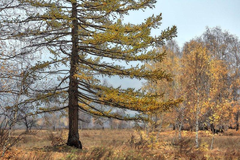 башкирия, южный урал орск новотроицк Осенняя тишина..photo preview