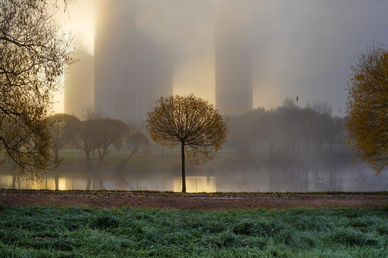 пейзаж,город,озеро,парк,утро,туман Солнце встаёт.photo preview