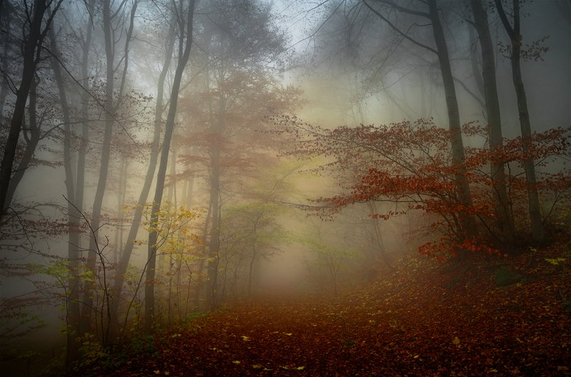 landscape nature scenery forest wood autumn mist misty fog foggy colors mountain vitosha bulgaria туман лес Autumn celebration / Осеннее торжествоphoto preview