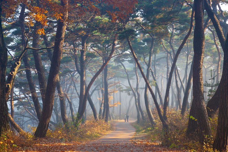 forest, autumn, place, korea, trees, pine Relaxationphoto preview