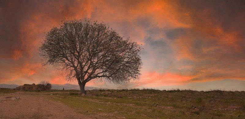 Tree & cloudphoto preview