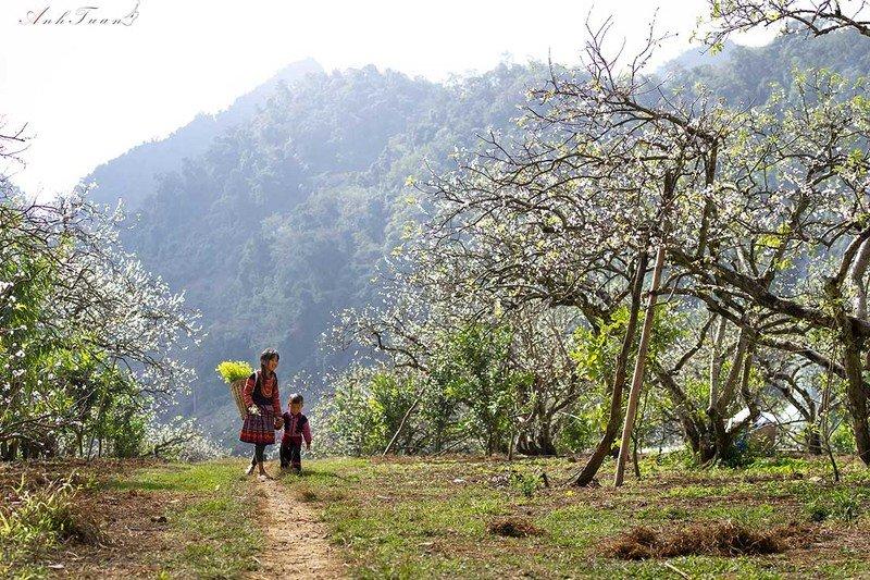 #sellingphoto #landscape Springphoto preview