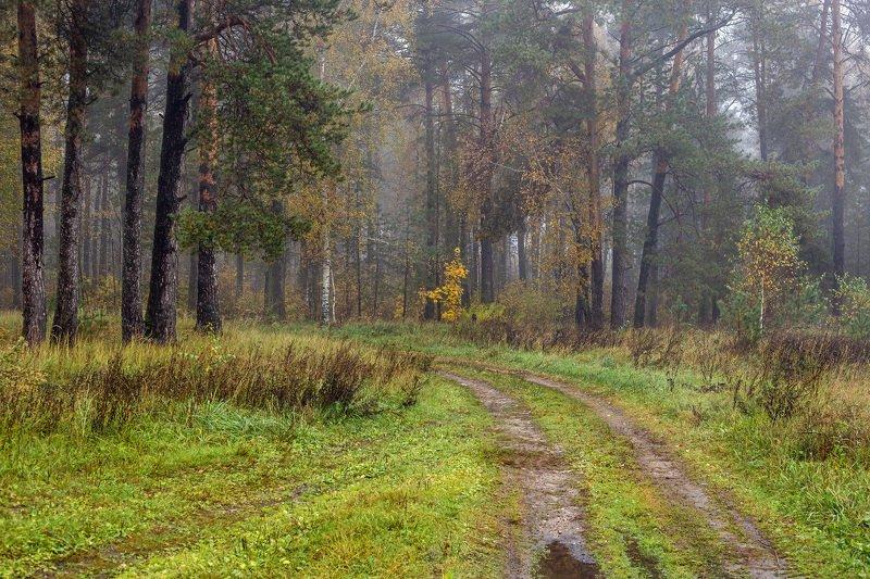 осень утро туман лес дорога лужи На опушке осениphoto preview