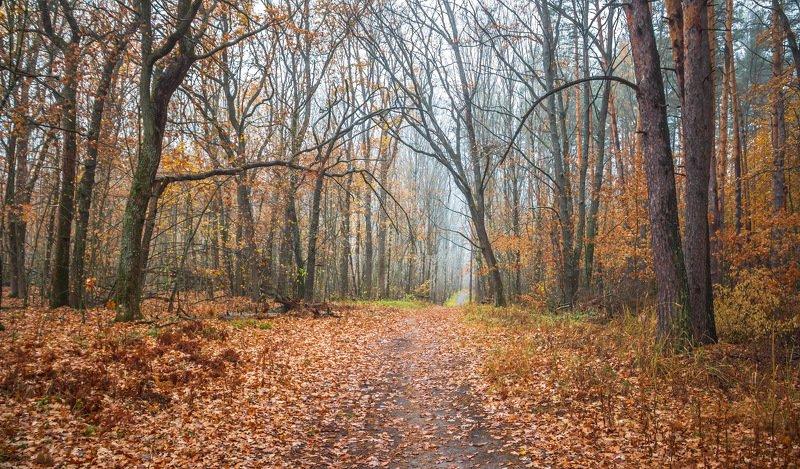 природа, осень, октябрь, лес, туман photo preview