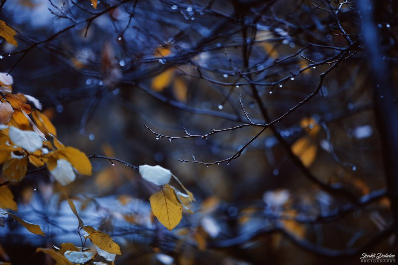 rain, trees, raindrops, autumn, winter, yellow, leaves, leaf, autumn leaves, morning, outdoor, canon photography, photography Rainy morningphoto preview