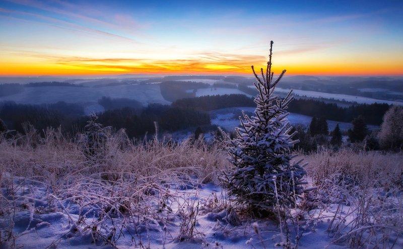 удмуртия, поля, пейзаж, холмы, утро, пейзаж, шаркан, шарканский район В лесу родилась елочкаphoto preview