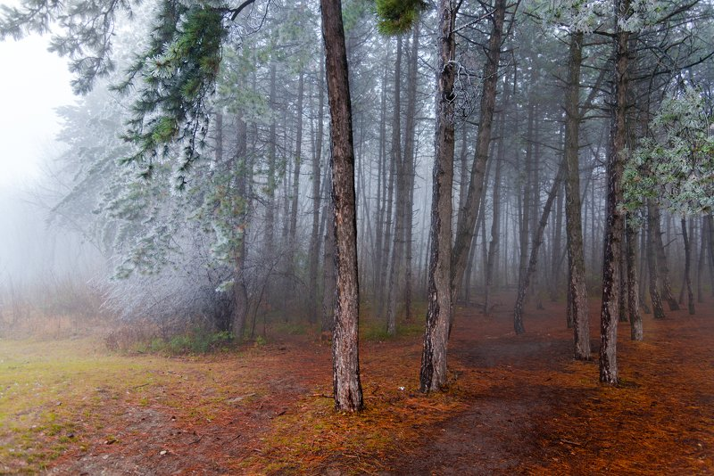 лес,туман,зима,природа,пейзаж На туманной опушкеphoto preview