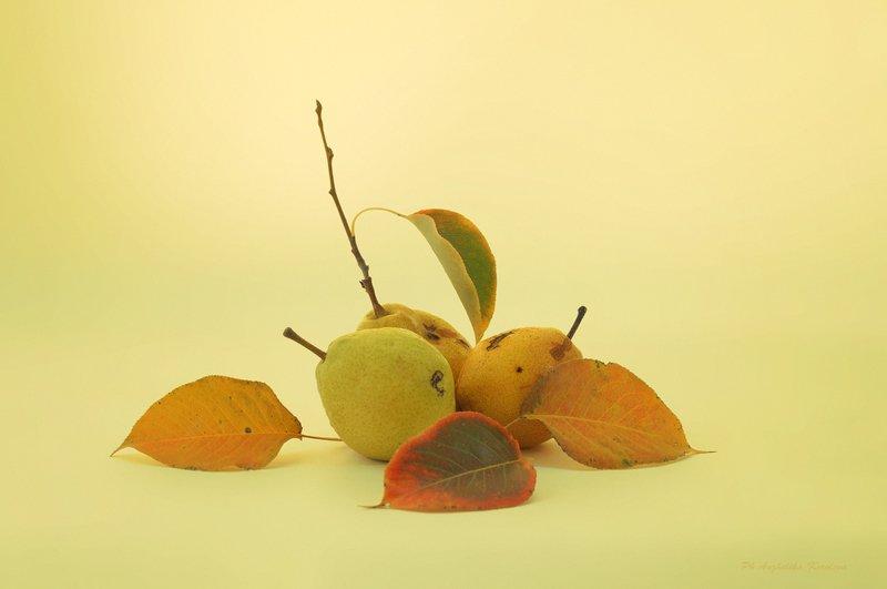 декабрьские груши,,photo preview
