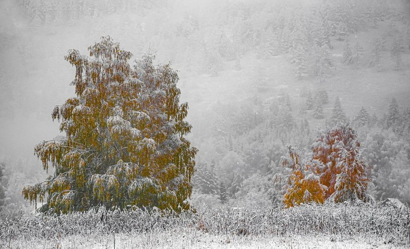 алтай. осень. горы. Первый снегphoto preview