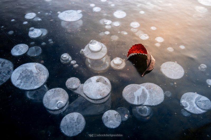 Frozen Bubblesphoto preview