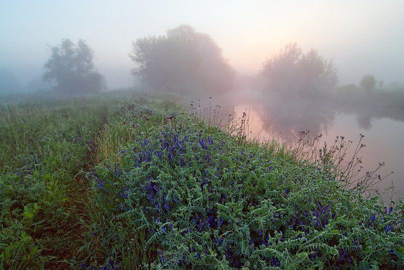 речка , цветы , туман , рассвет начало дняphoto preview