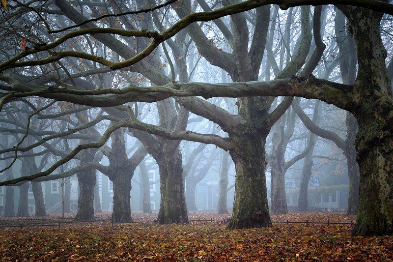 платаны trees magic mist morning tree foggy fog nature path autumn fall poland платаныphoto preview