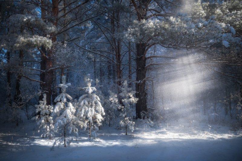 алтайский край, советский район, шульгин лог, сосновый бор, лес, сосны, сосенки, лучи света, иней, под пологом леса, лесной пейзаж, зимний лес, лес зимой, зимние сосны Под пологом зимнего лесаphoto preview