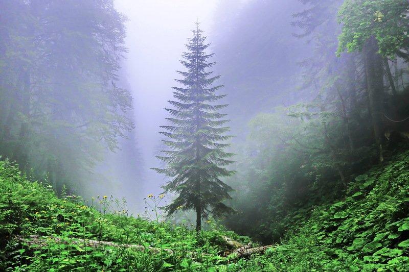 горы туман дерево Ельphoto preview