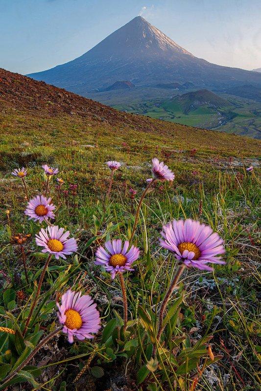 Цветы и Вулканыphoto preview